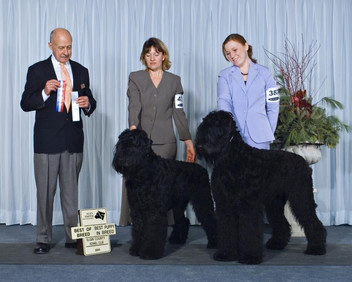 Best Puppy in Breed and Best of Breed 2006
