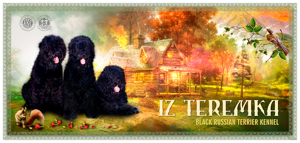 Iz Teremka BRT Kennel Header Photo