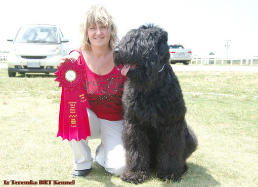 Black Russian Terrier Dafna and Lana
