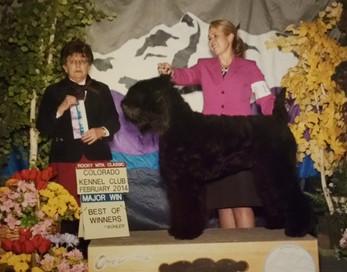 Colorado Kennel Club February 2014