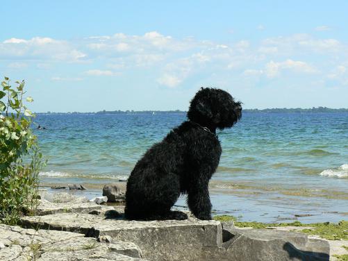 Lari Visits Lake Ontario