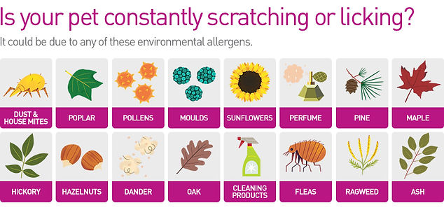 different types of environmental allergens