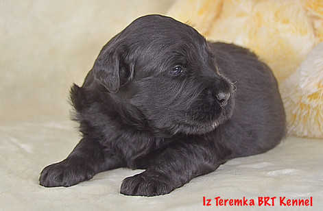 Honey Iz Teremka about four weeks
