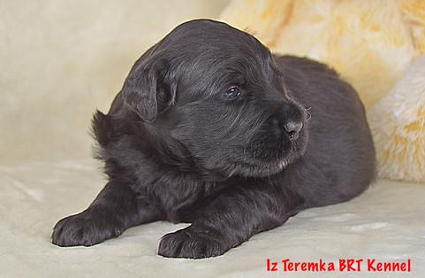 Honey Iz Teremka about four weeks