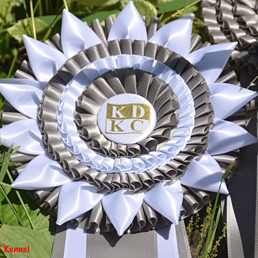 Close up shot of the Kingston District Kennel Club Ribbon 2018