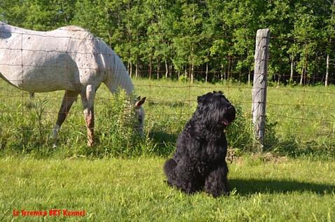 The mare Luna and Tori