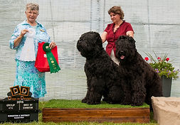 MultiCh. Eremey Son Lari Iz Teremka , group 4th and Multi.Ch. What a Wonderful Girl, aka Glasha group 3rd BBE at Kingston and District Kennel club, 2015