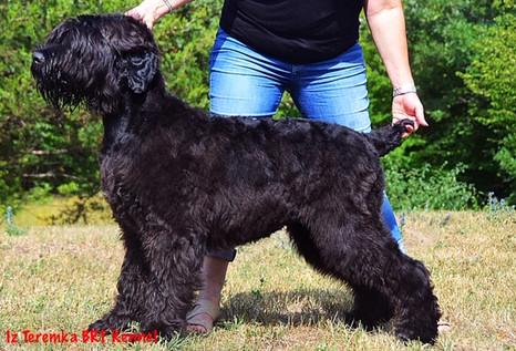 Dasher 6 Months Old