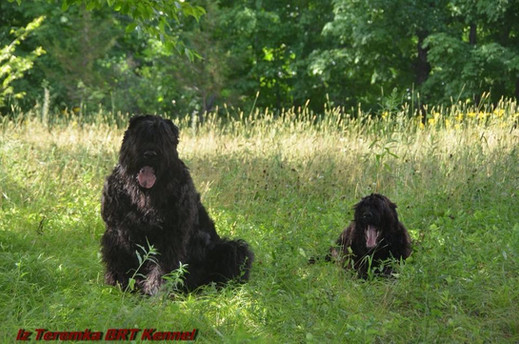 Two Black Russians In The Tall Grass