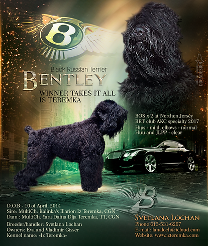 Bentley Iz Teremka - Sire of Litter J
