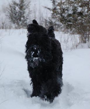 Taras Posing In The Snow