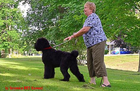 Sasha walking her Owner