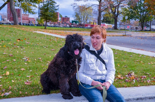 Black Russian Terrier At Lake Ontario Park Kingston ON