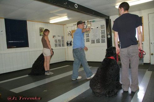 Obedience Training With Bill