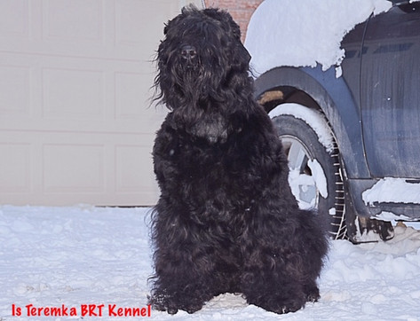 Dasher sitting in the snow