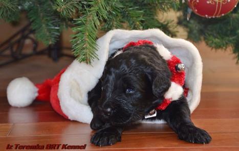 In Santa's Hat