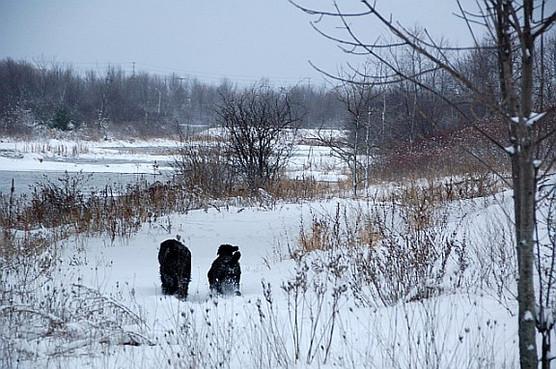 Snow Black Russians