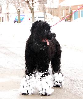 Lari And His Snowball Feet