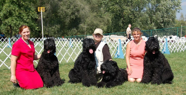 Black Russian Terrier Speciality St. Louis 2007