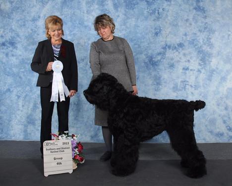 Sudbury and District Kennel Club 2013