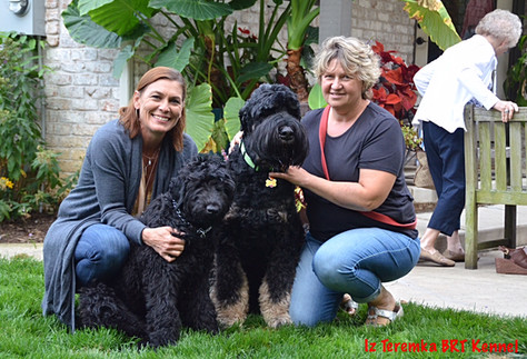 Amy, Lana and Black Russian Terriers