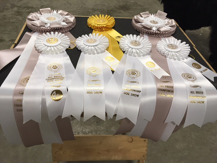 Ribbons Blitzen won at Nippissing Kennel Club Show