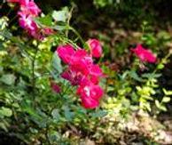 planting].jpg