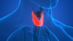A Primer on Thyroid Dysfunction