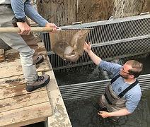 fish in net medium 2 (2).jpg