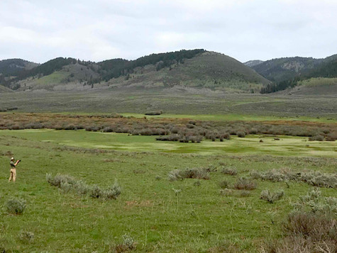 Partnership Celebrates Progress: Upper Blackfoot River Cutthroat Trout Run Second Highest Since 2001