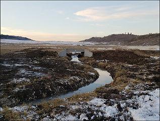 Chippy Creek cover photo (1).jpg