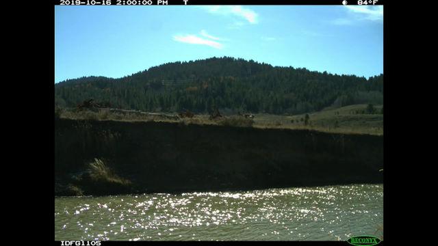 Restoration at 100 Tree Site — Blackfoot River Wildlife Management Area