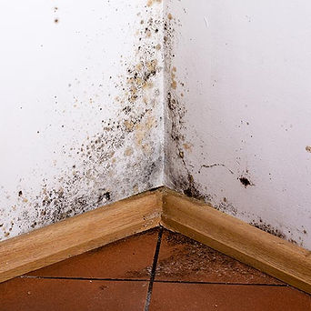 Mold Remediation, Mold Removal in El Paso