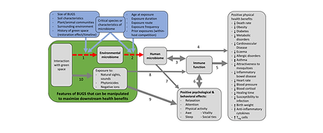 role of microbiomes in human health
