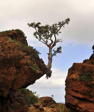Tree growing and hanging from rock