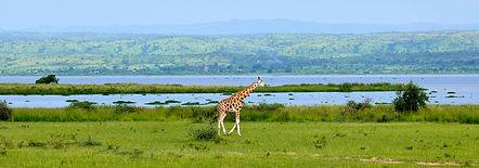 Albert-Lake-Uganda.jpg