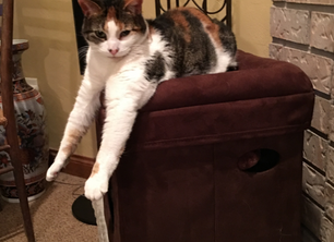 Cat Convert