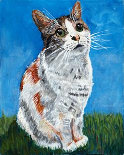 Mini - Calico cat
