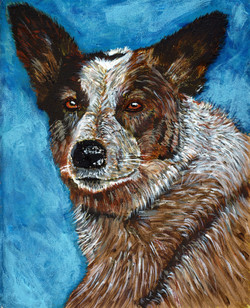 Sheela - Australian Cattle Dog