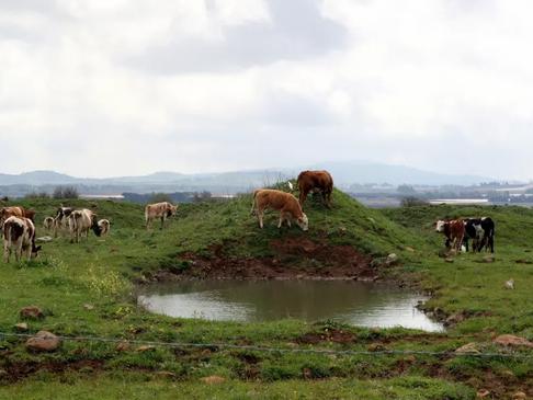 New behavior analysis AI tech allows you to improve a cow's 'moood'
