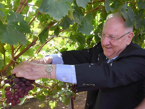 President Honored with New Grapes Named 'Rivlin' after his Late Wife