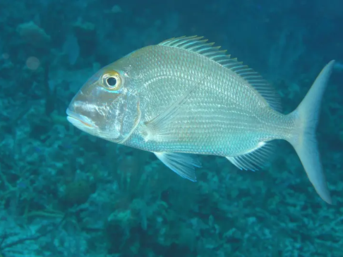 Israeli research may help fish multiply, tackle world hunger