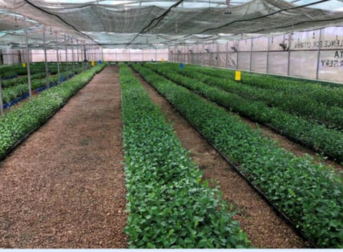 Indo-Israel Agricultural Project To Address COVID-19 Challenges