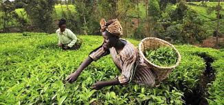 'Investment in agric vital for economic diversification'