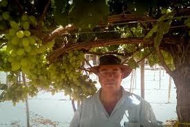 """""""East-West crosses have led to unique grape cultivars"""""""