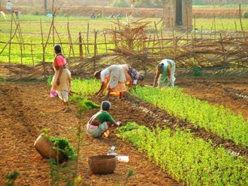 Goa looking at Israel for farming solutions