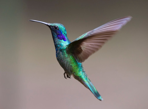 Israel & the hummingbird: 3 reasons to be hopeful this World Food Day