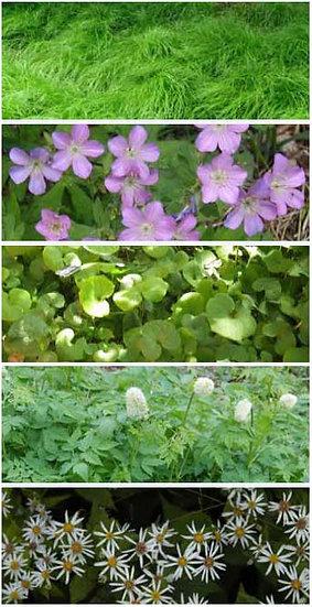 Woodland Classics Garden Combo native plants