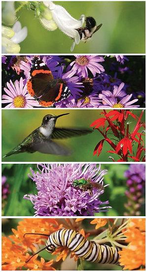 Pollinators Plus Garden Combo native plants