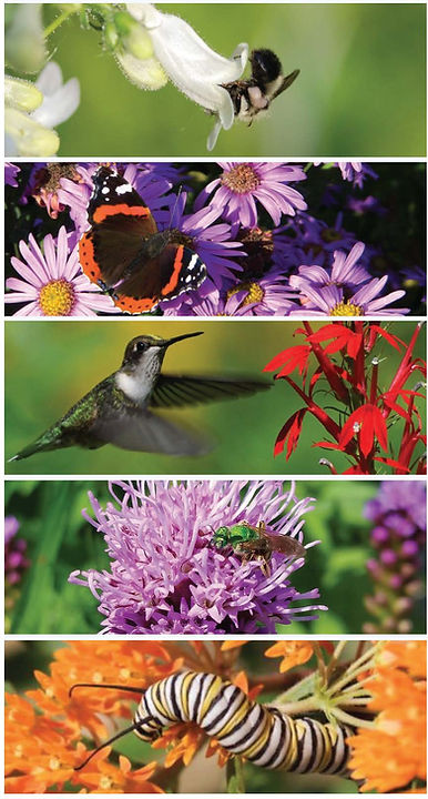 Pages from GMG Pollinator Plus Pamphlet